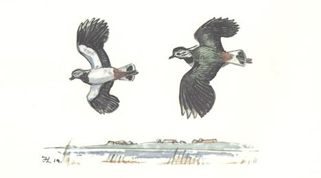 Naturconcert Trækfuglene